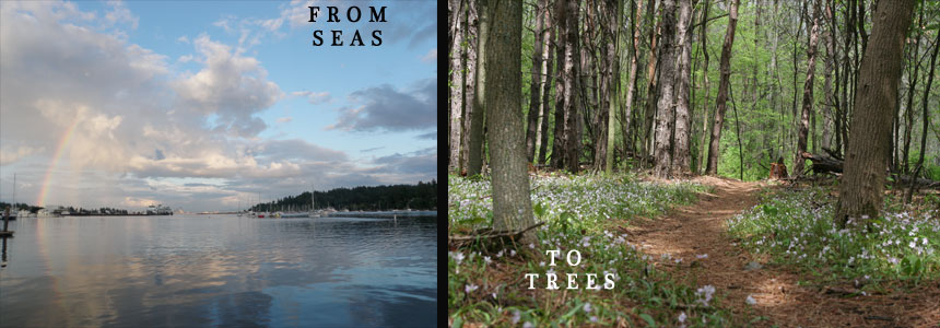 From Seas to Trees