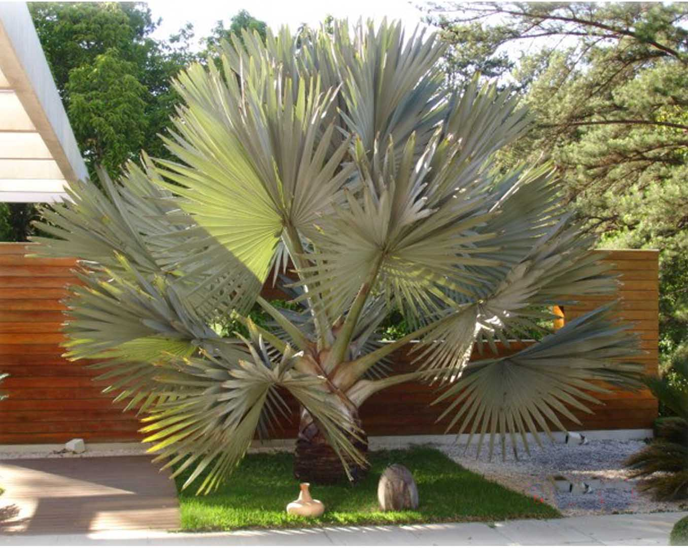 plantas jardim de sol : plantas jardim de sol:entre as plantas para ficar com as cores das plantas