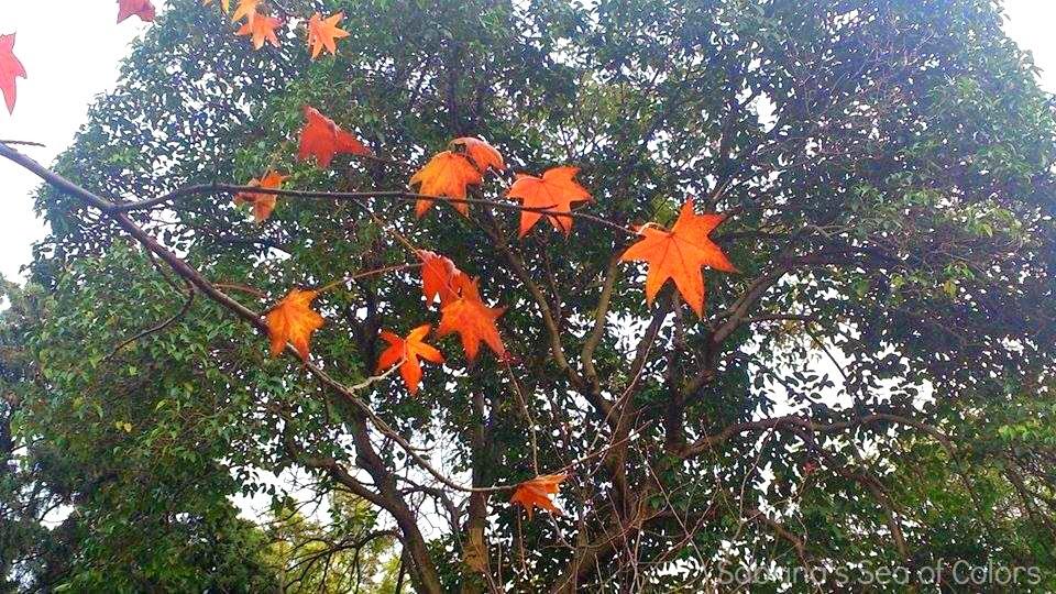 Miércoles Mudo. Colores de otoño