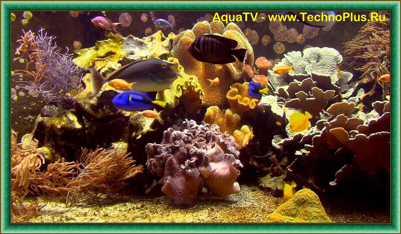 Плазменный аквариум-визуализатор для телевизора на DVD (9 в 1) живой аквариум в телевизоре