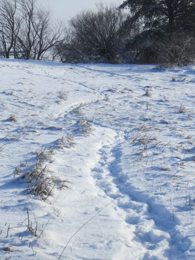snowshoe tracks