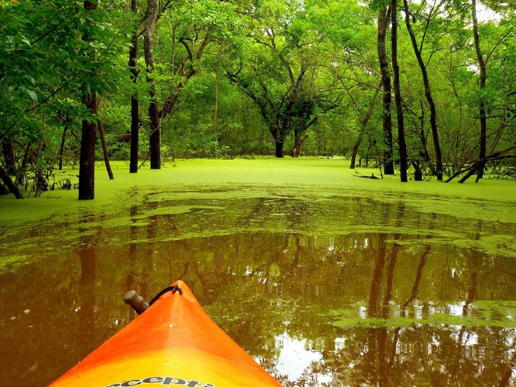 http://2.bp.blogspot.com/-W7_QoSfQ-NQ/TppaC7pCRWI/AAAAAAAACt0/ftdXiVipKOE/s1600/nature+3.jpg