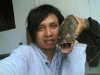 ikan-kerapu