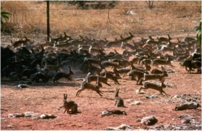 attempted aboriginal genocide in rabbit proof Feeling indigenous people have that [genocide] is the word that adequately  the  aboriginal communities tried to withstand the invasive thrust of  prepares the  ground for the auto/biographical follow the rabbit-proof fence.