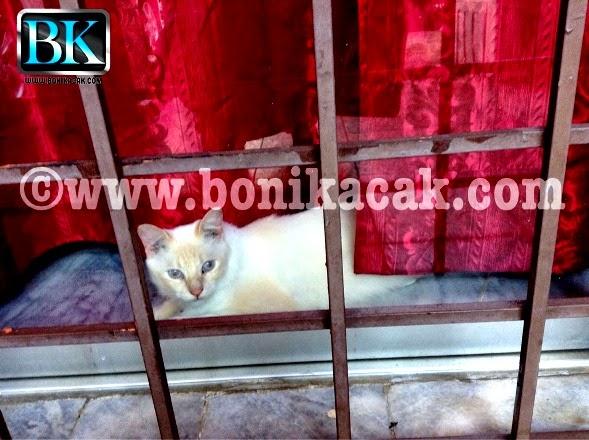 keistimewaan kucing, seronok bela kucing, kisah kucing, apa keistimewaan kucing, gelagat-gelagat kucing, kucing, kucing comel,