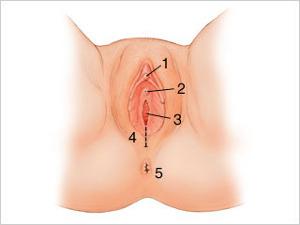 vagina clitóris coletor vaginal
