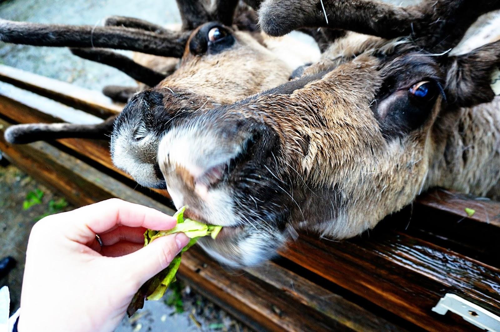 ketchikan reindeer alaskan cruise review