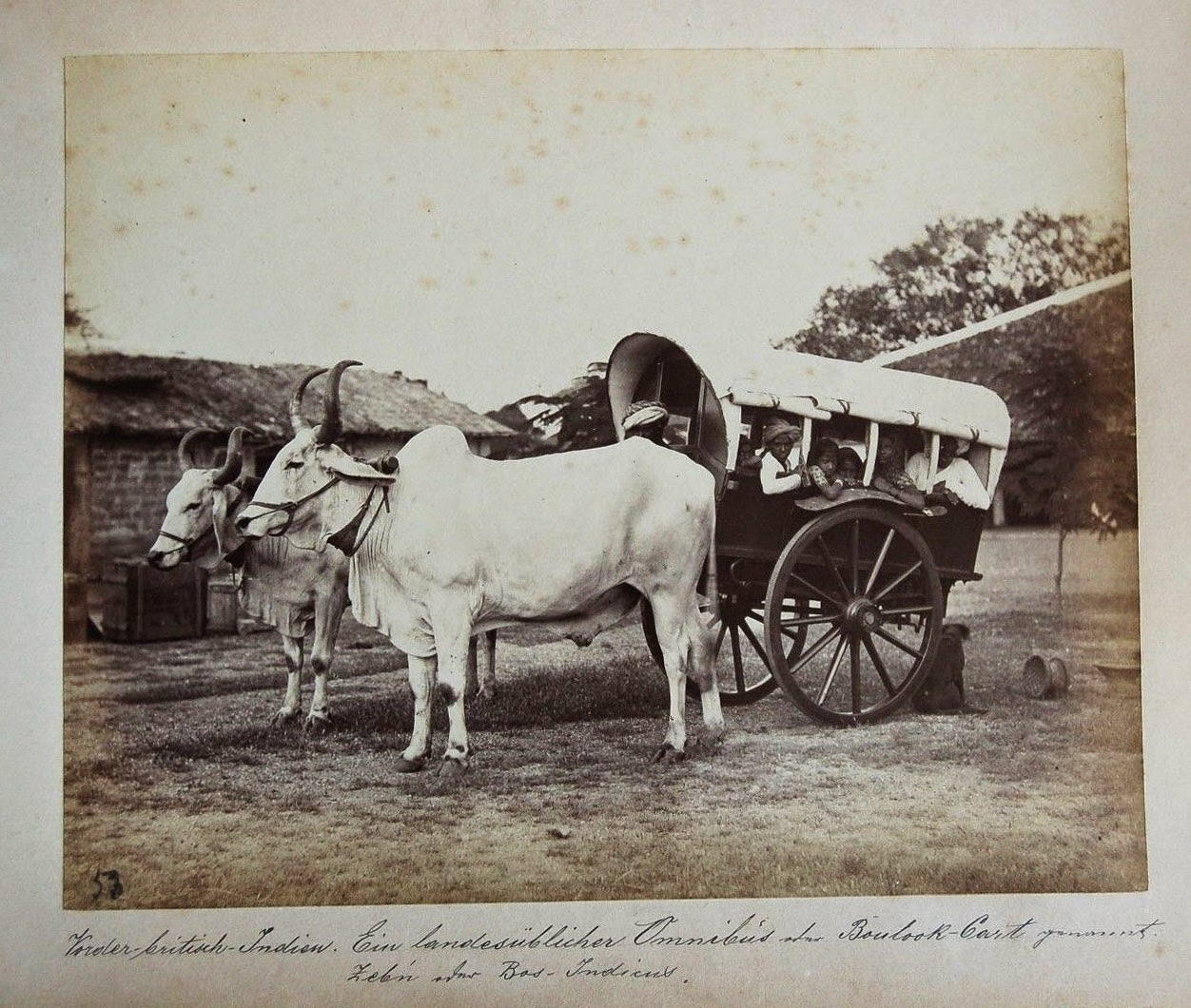 Indian Bullock Cart with Passengers