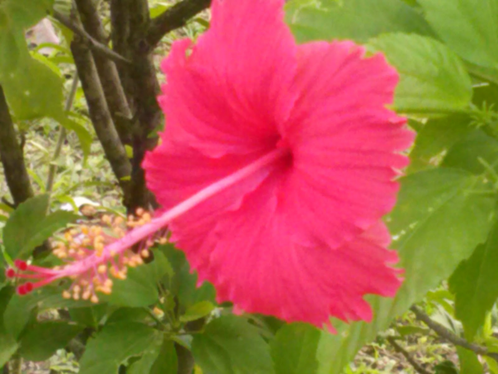 Science biology part b grouping and naming organisms 1 its scientific name is hibiscus rosa sinensis it is usually found red in color and would have five petals these flowers are from 4 18cm izmirmasajfo