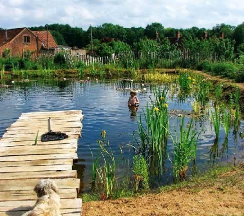 Tutoriales consejos acuarios y estanques acuatica for Estanque para perros