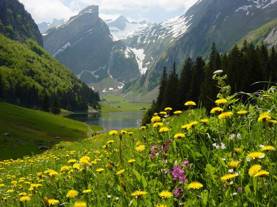 Natură vs peisaje
