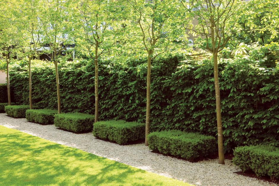 The newest rage in america seems to be not only growing for Garden design ideas with hedges