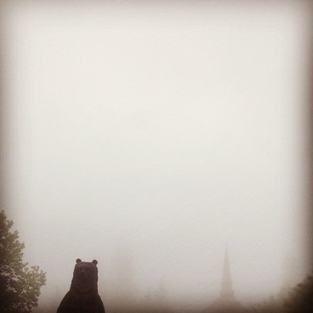 bear in the fog