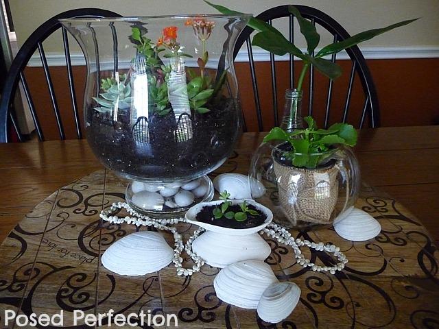 seashells, succulents and memories