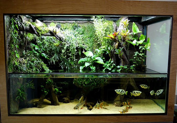 giant aquariums 300 gal paludarium. Black Bedroom Furniture Sets. Home Design Ideas