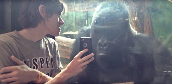 gorila vede poze cu gorile