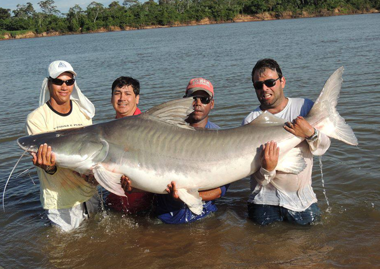 Huge 150 lb plus piraiba catfish caught in Brazil by Adriano de Monte