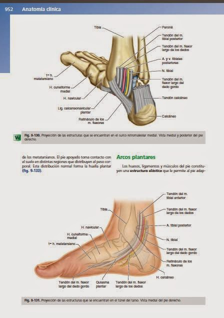 Anatomía para Cosmetología: CANALES RETROMALEOLARES