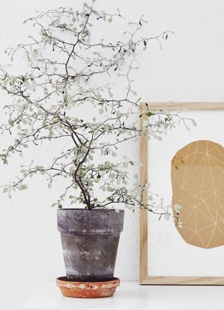 planter indeklima
