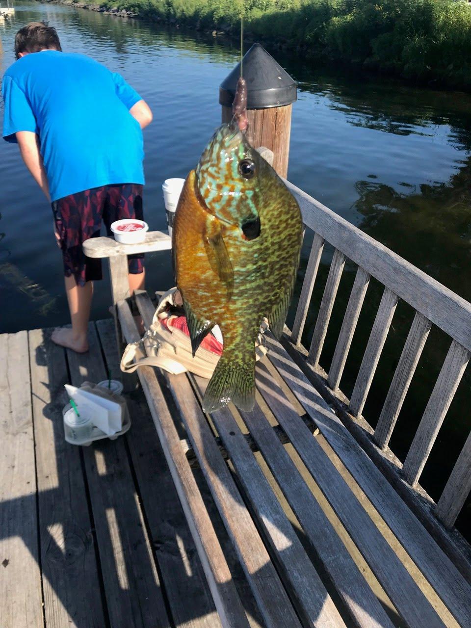 Big catch today on Wayzata dock.