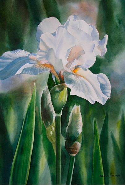 flores románticas de orquídeas pinturas decorativas con flores