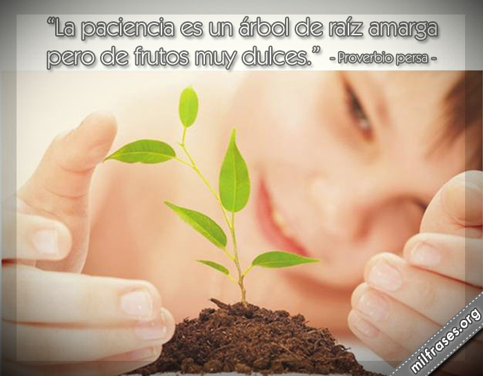 La paciencia es un árbol de raíz amarga pero de frutos muy dulces. Proverbio persa