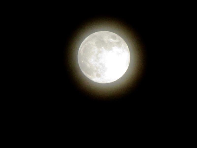 Japan Harvest Moon
