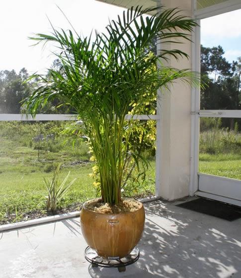 Blog fuad informasi dikongsi bersama 9 best air for Low maintenance air purifying plants