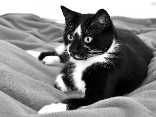 cute cat (20)