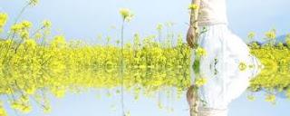 Vũ Thị Huyền Trang, Trang rêu