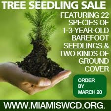 Tree Seedling Sale