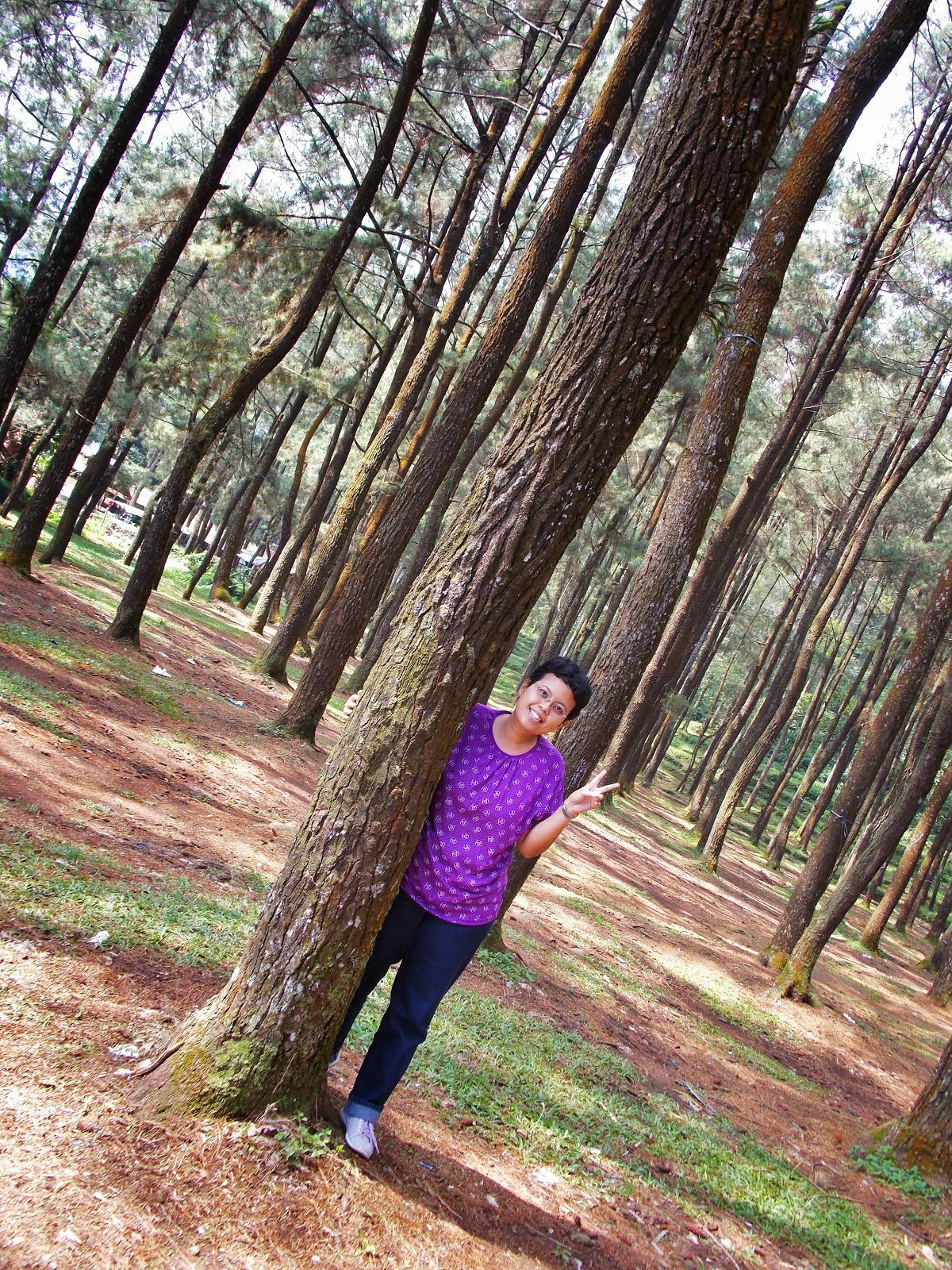 Pine Forrest Mt. Salak