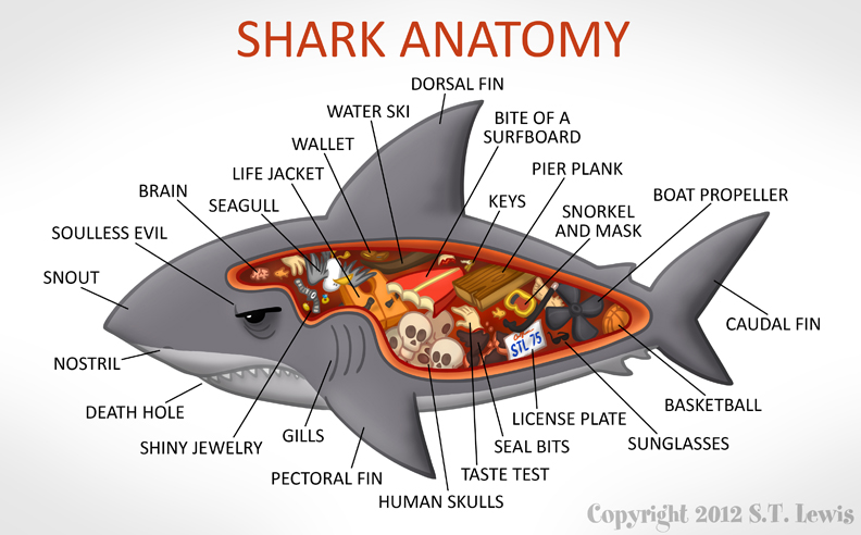Shark Internal Anatomy Picture http://stlewis.blogspot.com/