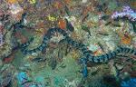 Binatang Laut Yang Paling Berbahaya Di Dunia