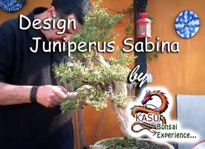 Sabina phoenicea