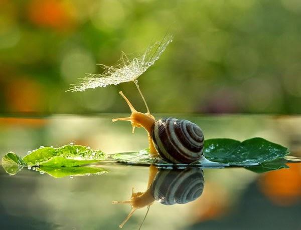 Snails: Photos by Vyacheslav Mischenko