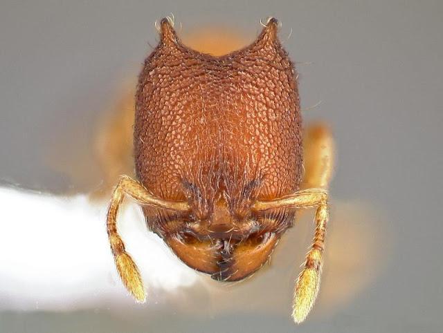 Liat Semut Di Mikroskop Yuk