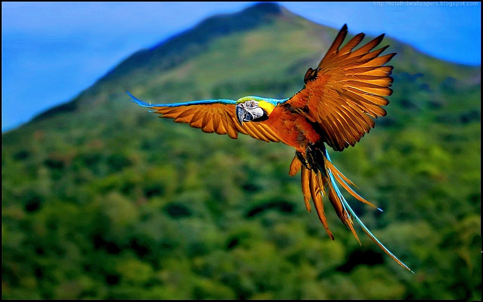 Kamal shah amazon parrot hd wallpapers - Amazon wallpaper hd ...