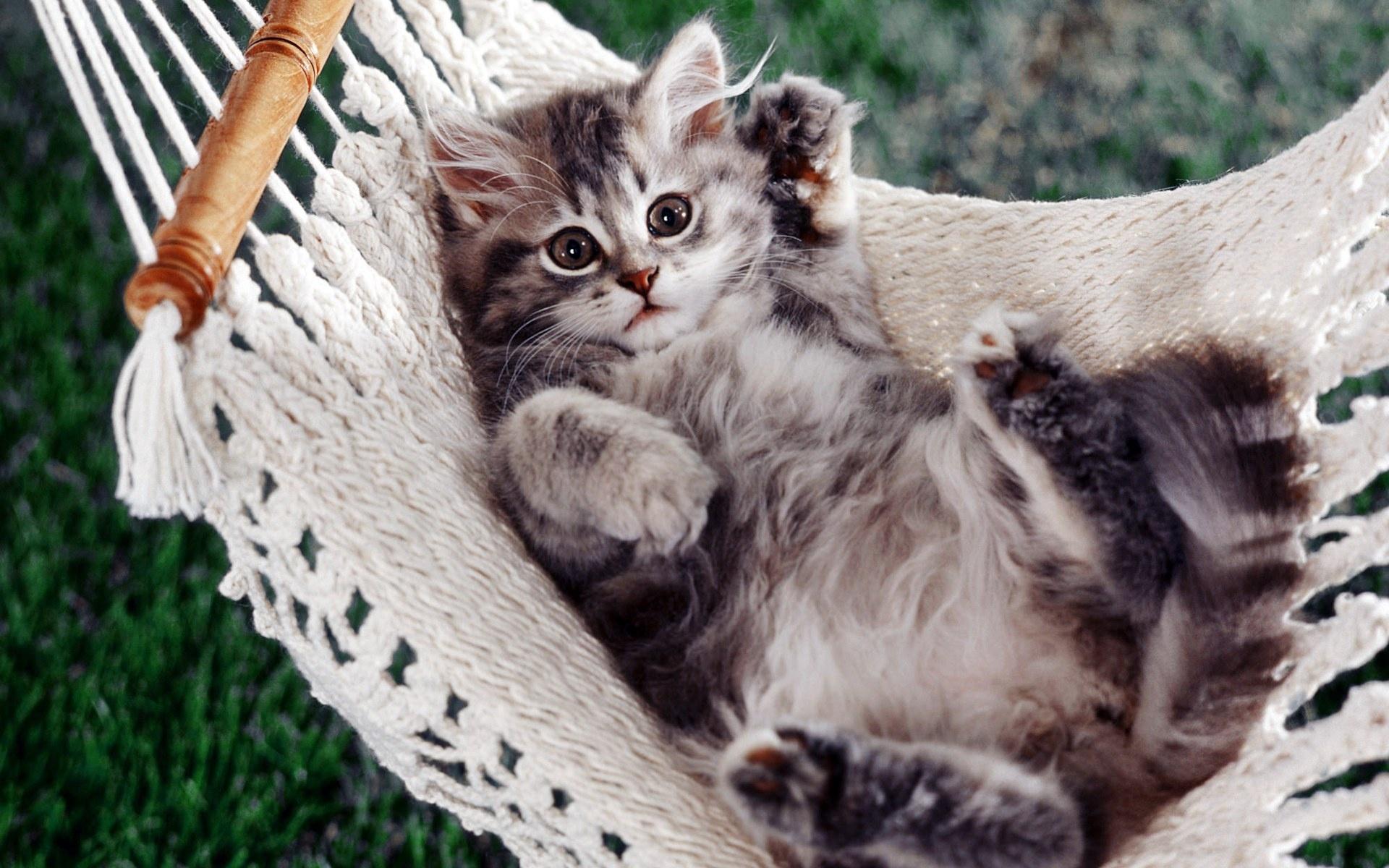 [Image: chilling+cat-10-green-1200.jpg]
