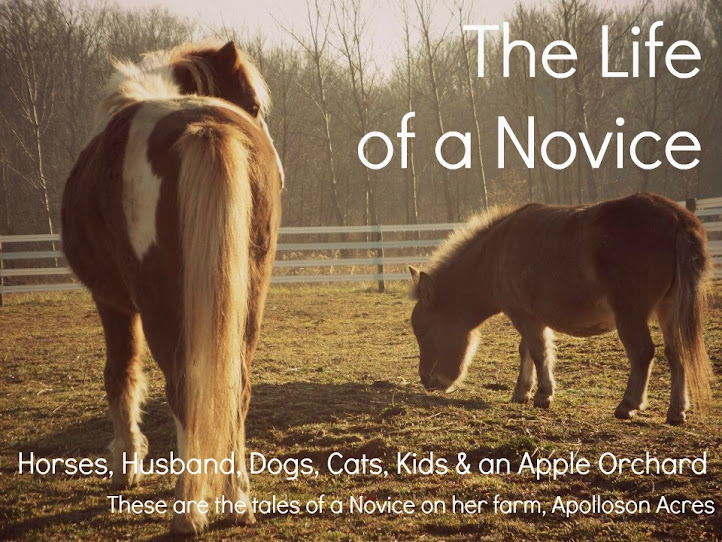 The Life of a Novice!