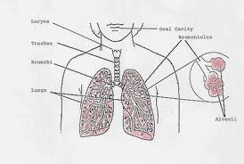 Early warning for lung cancer
