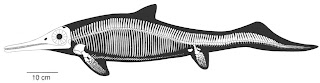 esqueleto de Mixosaurus