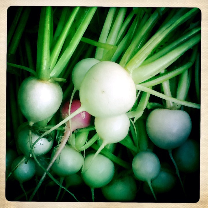 tender white turnips