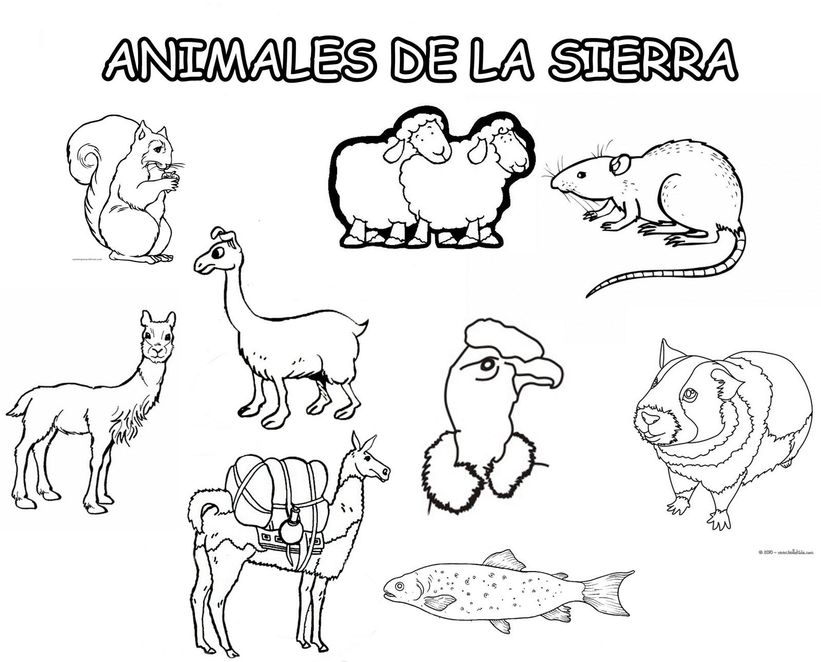 Animales de la sierra peruana para colorear - Imagui