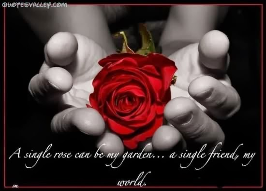 """A single rose can be my garden... a single friend, my world."" ~ Leo Buscaglia Picture of someone holding a red rose"