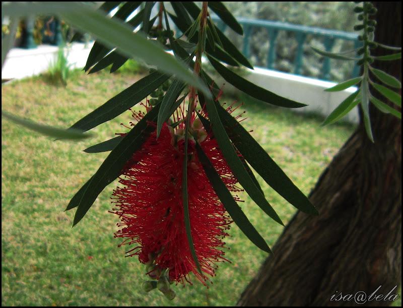 jardim rosas vermelhas:Um brilho de luz: Árvore de jardim com flores vermelhas