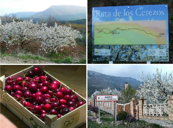 imagen_valle_caderechas_burgos_cerezas_madrid_ruta_cerezo_flor_caja