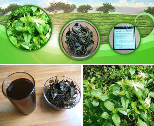 Vang tea