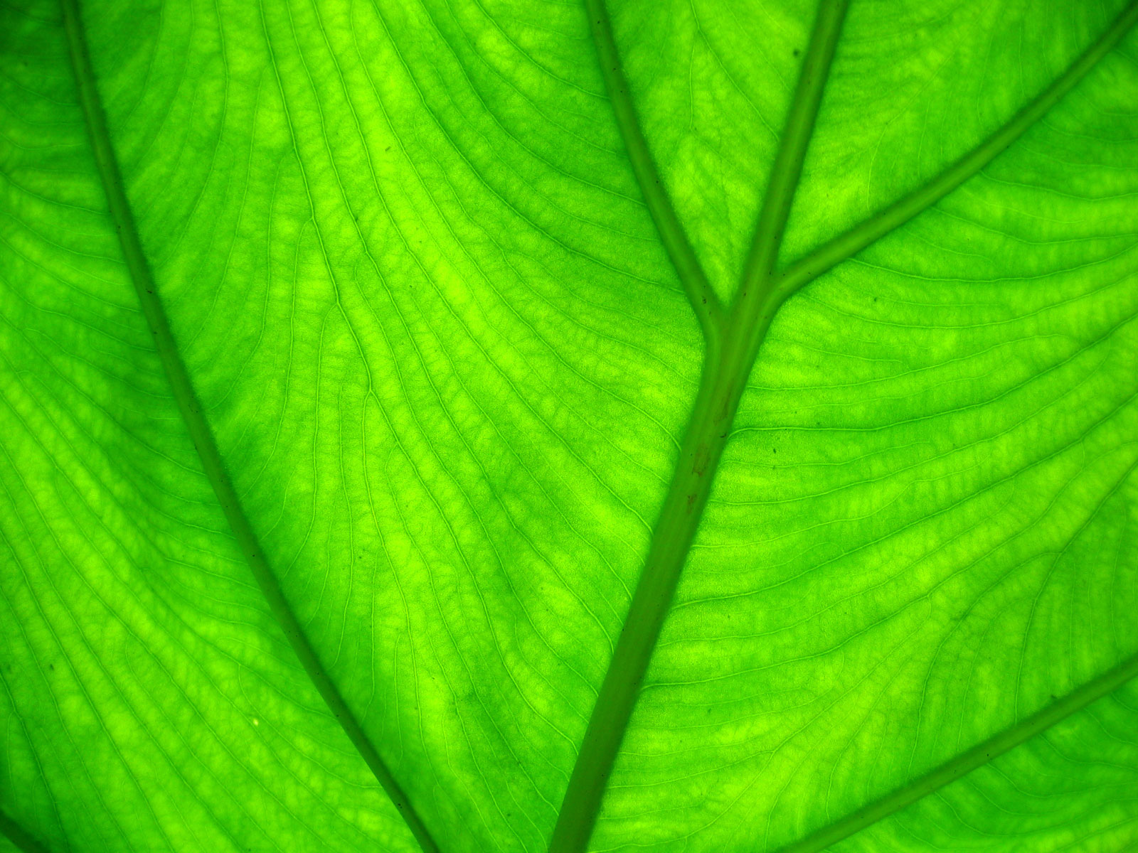 Black and White Wallpapers: Green Leaf Wallpaper