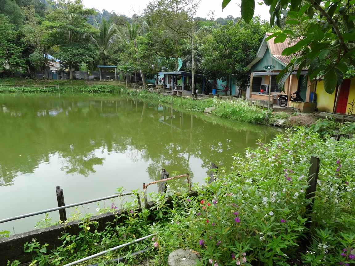 Fishing spots in kuala lumpur selangor hj nawawi for Freshwater pond fish